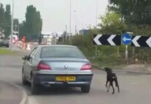 Welsh Police Seek 'Hazardous' Dog-walking Motorist