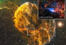 Origins Of Jellyfish Nebula