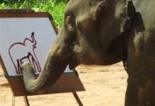 Elephant Paints
