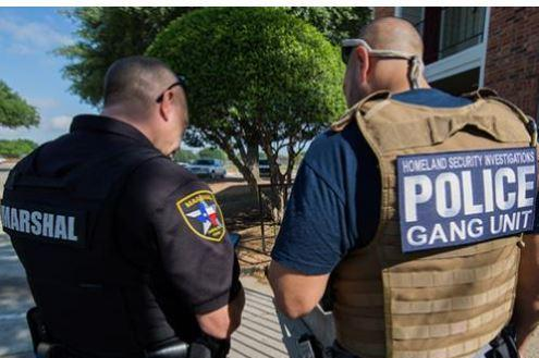 ICE agents helped in massive gang sweep
