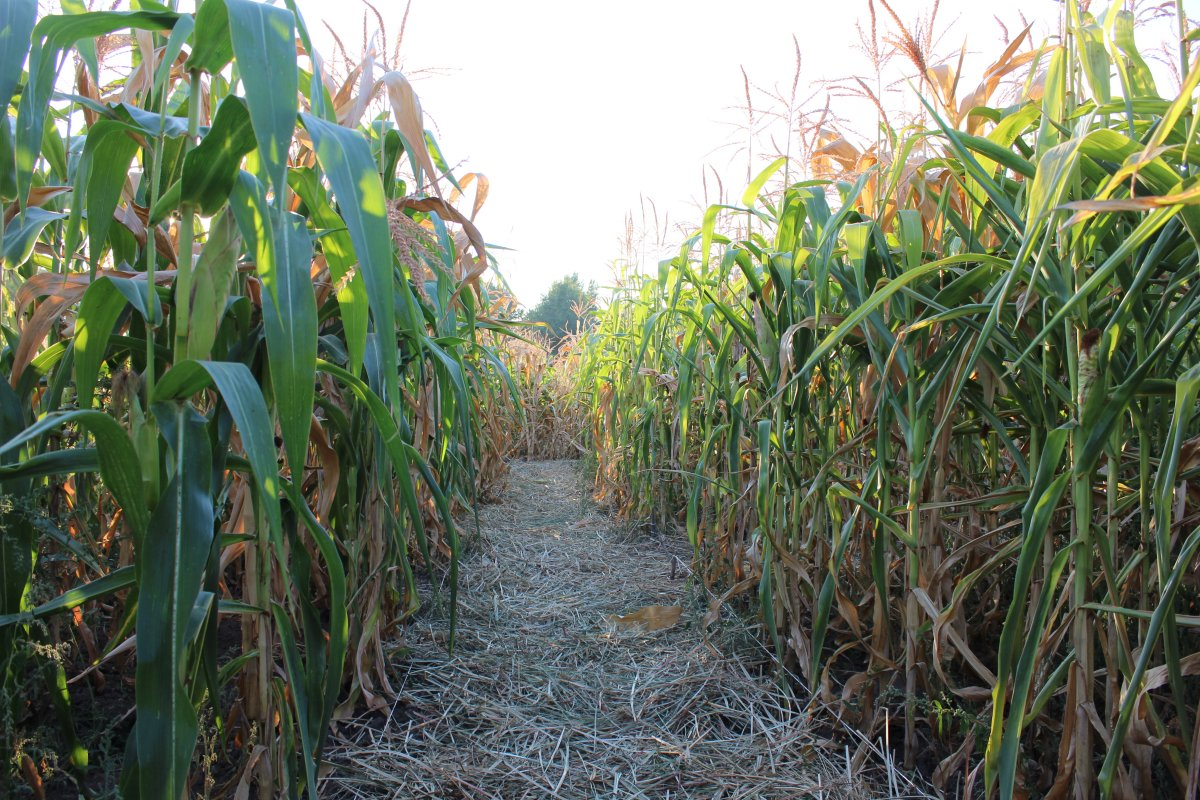A three-year-old boy was left at a Utah corn maze Monday night