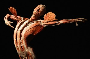 The Body As Art Gephardt Daily