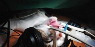 Cat iTunes - Gephardt Daily