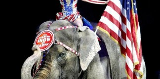 Ringling Brothers Eliminate Elephant Acts