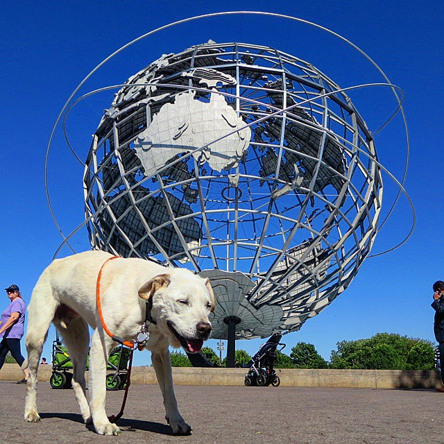 Terminal Dog on 'Bucket List Adventure'