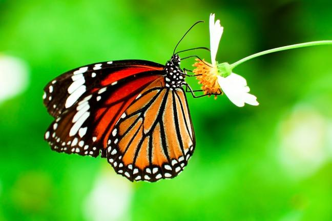 Vineyards in Washington state Butterflies