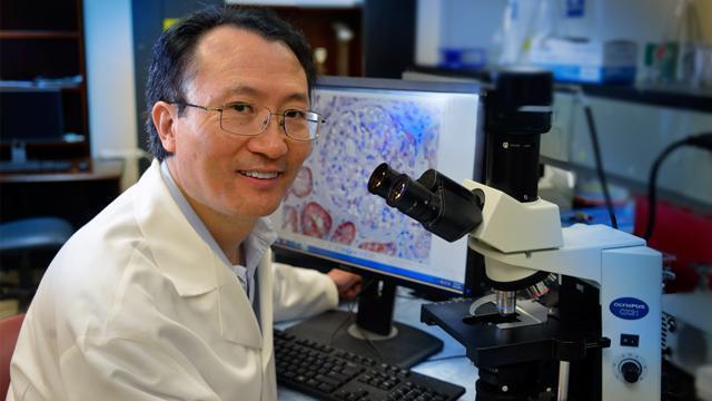 Protein Found That Signals Kidney