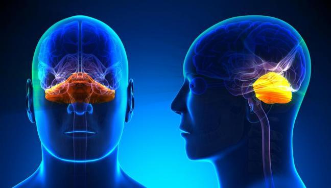 cerebellum part of creativity in brain