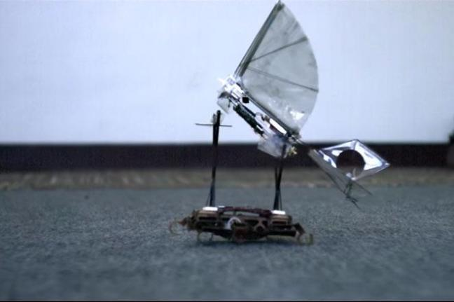 Robotic Bird Berkley California