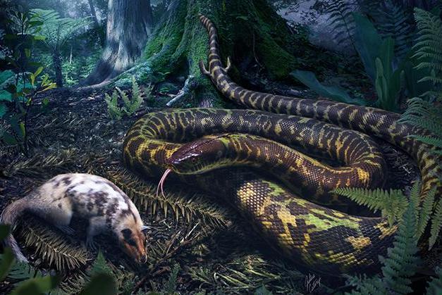 Serpent Evolution