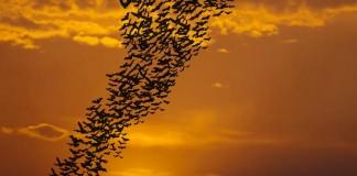 Texas A&M Trying to Shutdown Batcaves