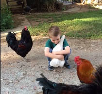 hugging chicken