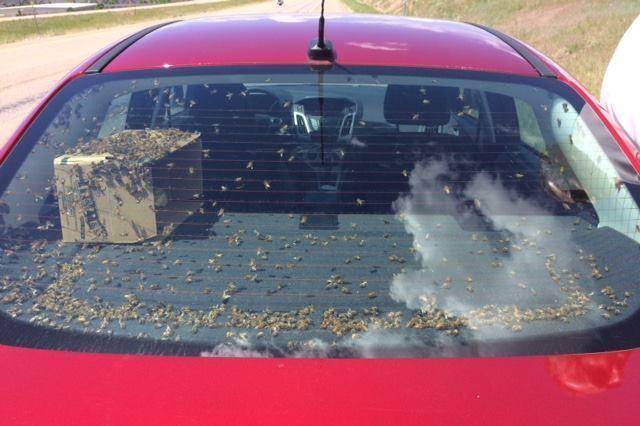 Car Full of Bees