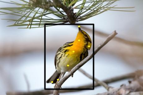 Recognition Software for Birds