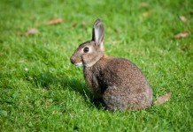 Austrian-teacher-receives-warning-after-killing-rabbits-in-front-of-class