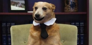 District-attorney-casts-talking-dogs-in-PSA-about-hot-car-dangers