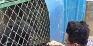 Puppies-adopted-by-Chinese-man-turn-out-to-be-Asian-black-bears (1)