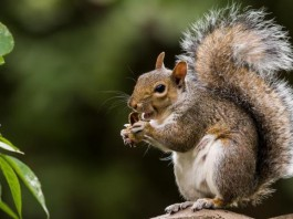 Squirrel-virus-may-have-killed-3-German-men