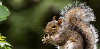 Squirrel-virus-may-have-killed-3-German-men