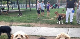City to Host 'Yappy Hour' Event