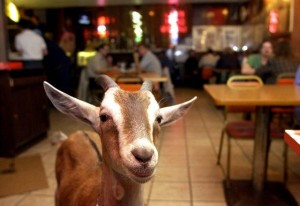 Billy Goat Tavern and Grill