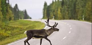 Ontario's 1000 Island Parkway Endangering Wildlife