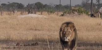 Zimbabwe Lifts Hunting Ban