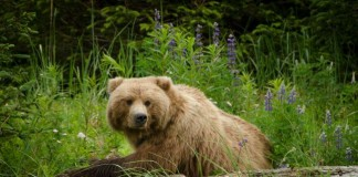 Grizzly Bear Mauled Woman