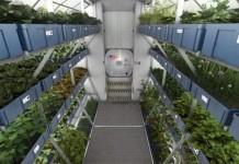 Astronauts Eat Their Inaugural 'Home-Grown' Harvest