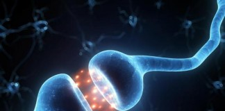 Scientists Discover Molecular Difference In Male, Female Brains