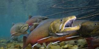 FWS Endangered Species Tracking App