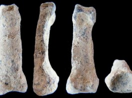 Oldest-Ever Humanlike Hand Bone Found In Tanzania
