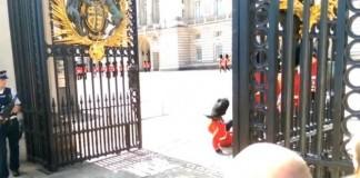 Queen's Guard Takes A Pratfall
