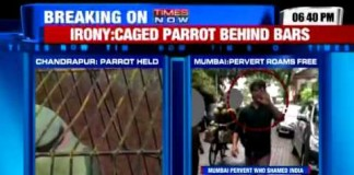 Parrot Accused Of Cursing At Elderly Woman