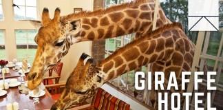 The Giraffe Manor Hotel Breakfast Guests