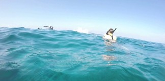 Snorkelers Film Showboating Dolphin's