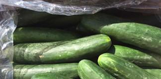 Bulk Unwrapped Cucumbers