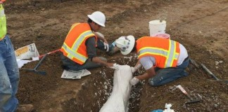 Ice-Age-fossils-up-to-200000-years-old-found-at-California-construction-site