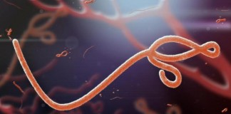 Ebola Persists In Semen