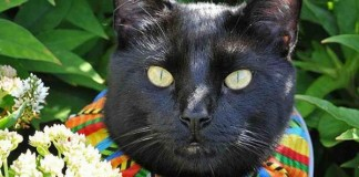Can Brightly Colored Collars Keep Cats From Killing Birds
