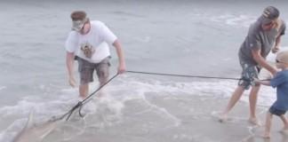 shark bites man, man seeks revenge