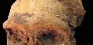 Fossilized Homo Erectus Skull Found In China