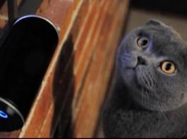 Kickstarter Campaign Raises $200,000 For Cat Music