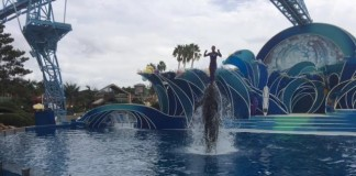 Seaworld To Start Phasing Out Killer Whale Show