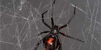 Spider DNA From Spider Web