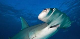Angler Education Can Help Protect Sharks