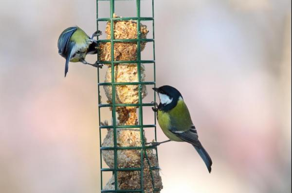 Wild Birds Would Rather Be Hungry Than Lovesick