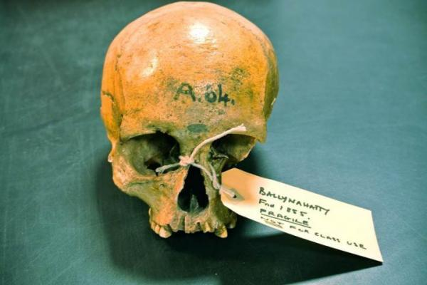 Genomes Of Early Irish Settlers Sequenced