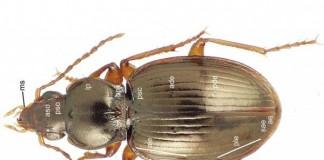 74 New Beetle Species