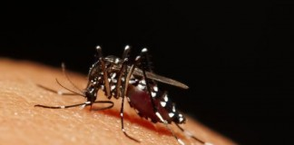 Scientists Genetically Modify Mosquito